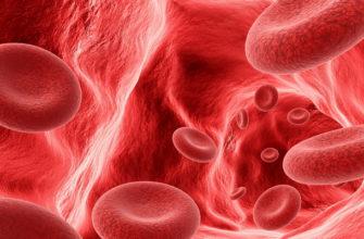 Влияние динамического магнитного поля (ИЭМП) на клетки человека